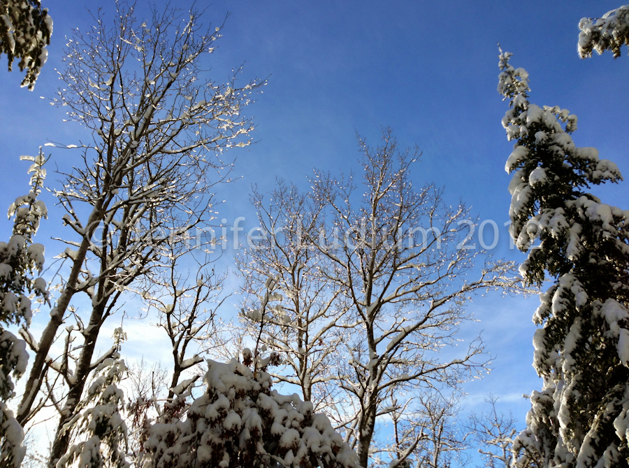 Scenic winter trees with glistening snow crystals in the sun and blue sky.