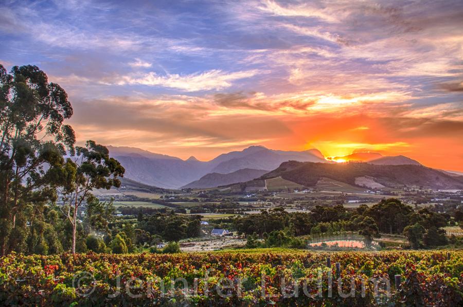 New 2014 South Africa Jennifer Ludlum
